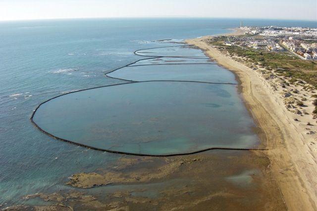 El Atún de Almadraba: patrimonio de Cádiz