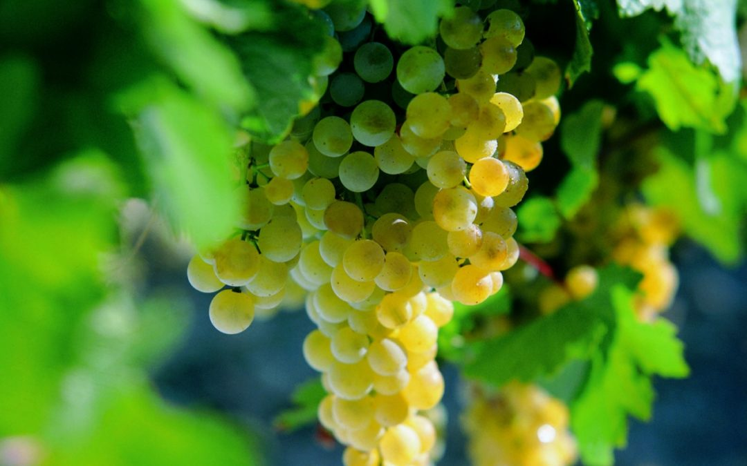 El Vino de Jerez: El gran desconocido