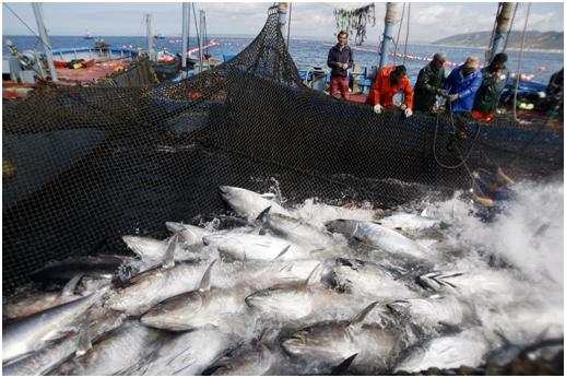 Pesca artesanal del atún de almadraba
