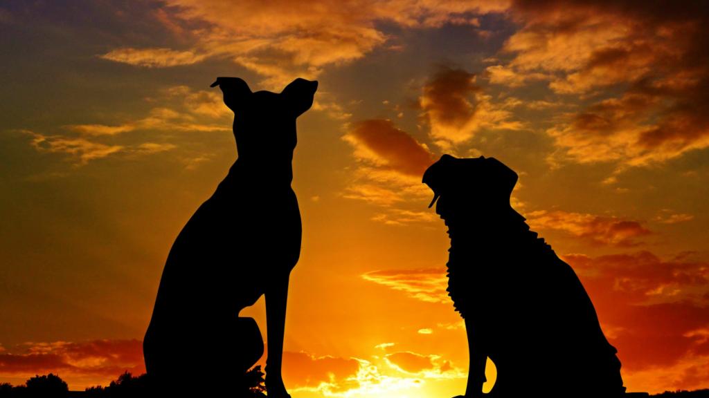 ¡Los perros también son bievenidos!