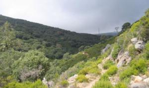 Rutas de Senderismo en el Parque Natural de los Alcornocales